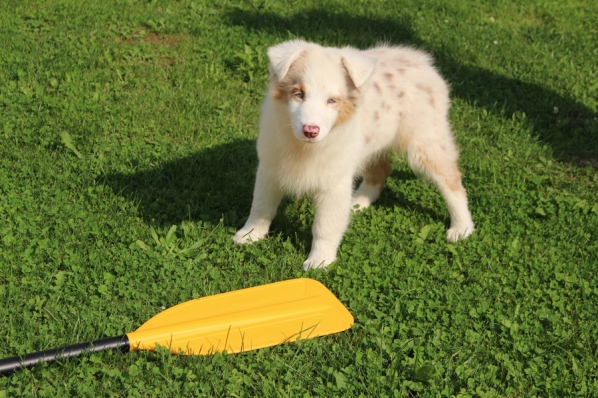 Our company´s mascot and Chief Happiness Officer has been testing our paddles since….since being a puppy.